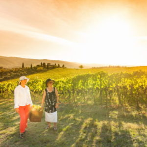 You will admire the splendid panorama from the top of the Bolognese hills, you will visit the vineyards and observe the stages of winemaking